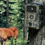 Quick Guide for Buying the Perfect Trail Camera for Hunting!