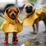 Why You Should Buy A Dog Rain Suit For Your Pet!