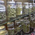 Why Buy Cannabis from Dispensaries Rather Than Dealers?